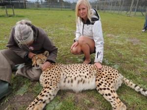 Malin med gepard